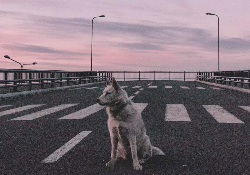 cane-e-umano