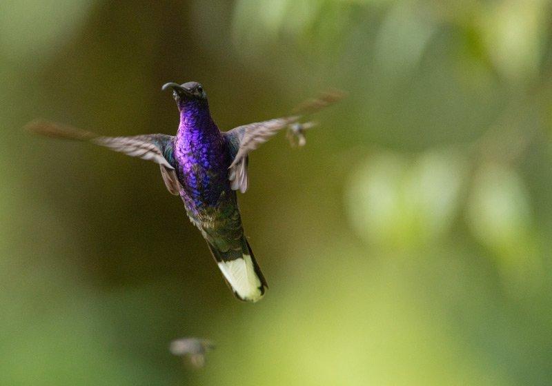 favola-del-colibrì-e-le-regole-del-lockdown