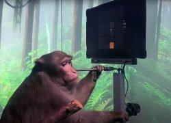 Elon Musk fa giocare una scimmia a pong