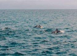 Oceani: vita e mezzi di sussistenza